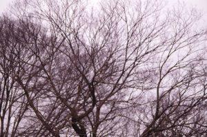 [ 満員御礼!キャンセル待ち ] ■名古屋開催■「やる気と主体性がなくなっちゃうワケ」第4回公開講座 @ カルチャーペポ | 名古屋市 | 愛知県 | 日本